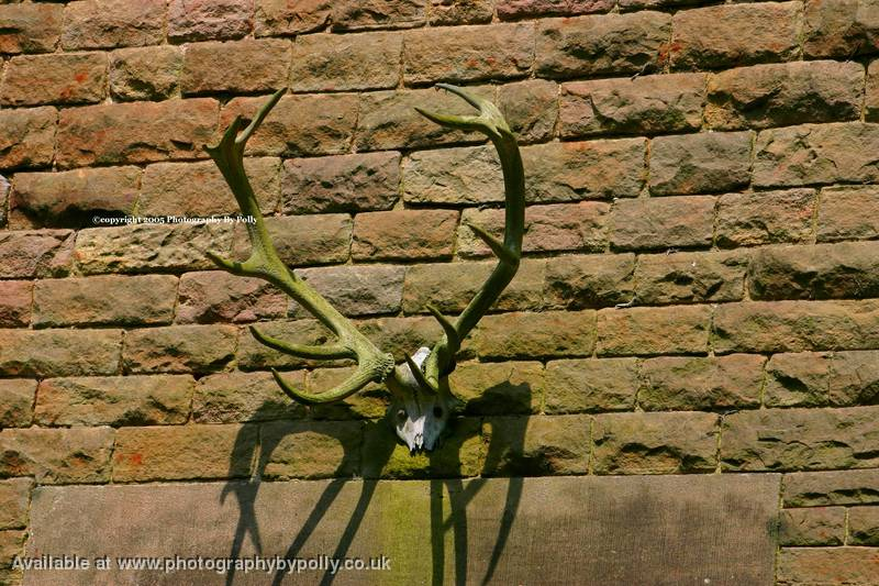 Stags Antlers
