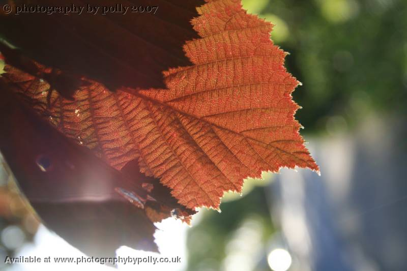 Fairy Light Leaf