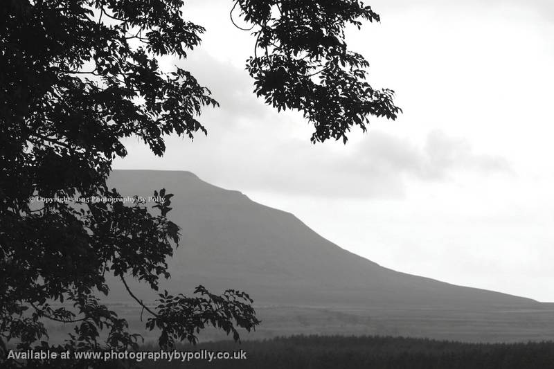 Gray Ingleborough