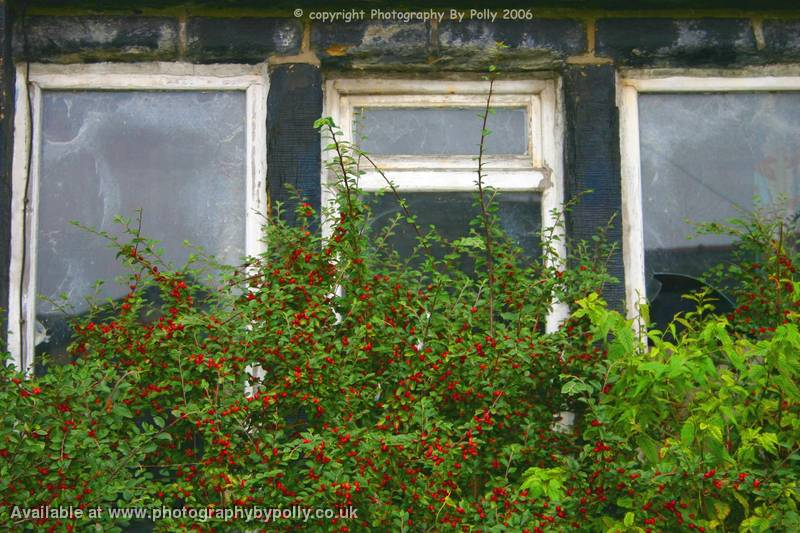 Rosehip Windows